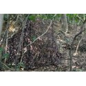 Tragopan Camouflage net in autumn wood 3x3m